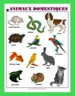 Affiche Animaux domestiques