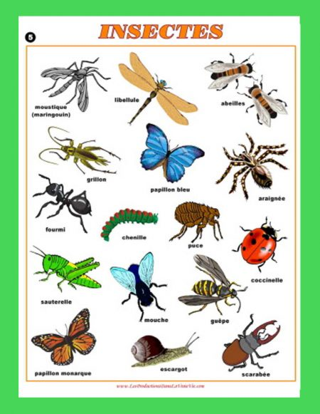 Affichage Insectes