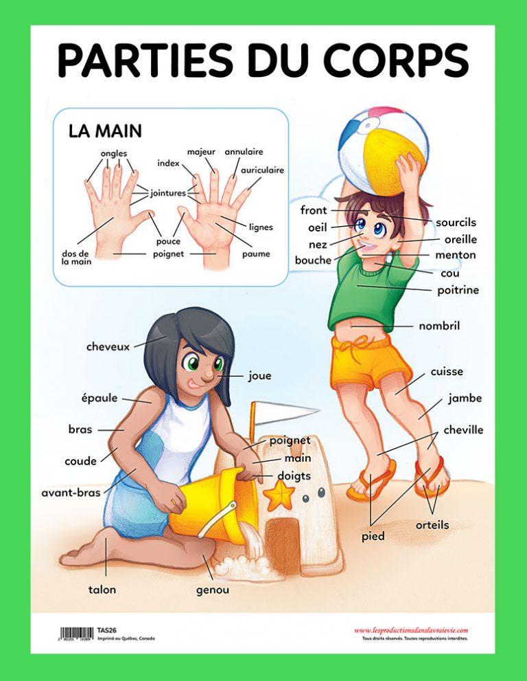 Affiche Parties du corps
