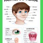 Affiche Parties du visage