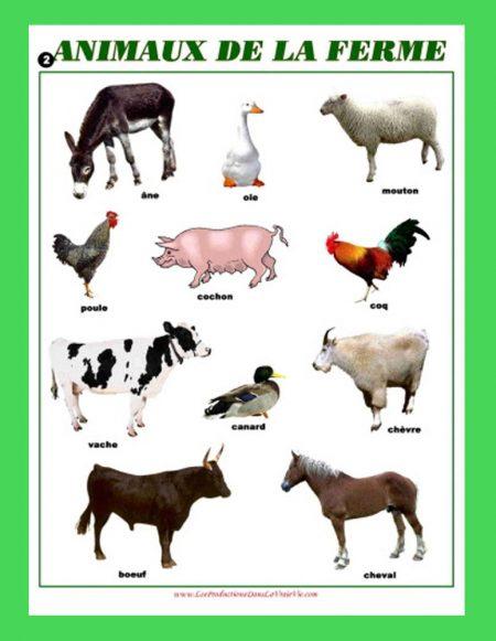Affiche Animaux de la ferme