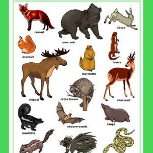 Affiche Animaux des bois