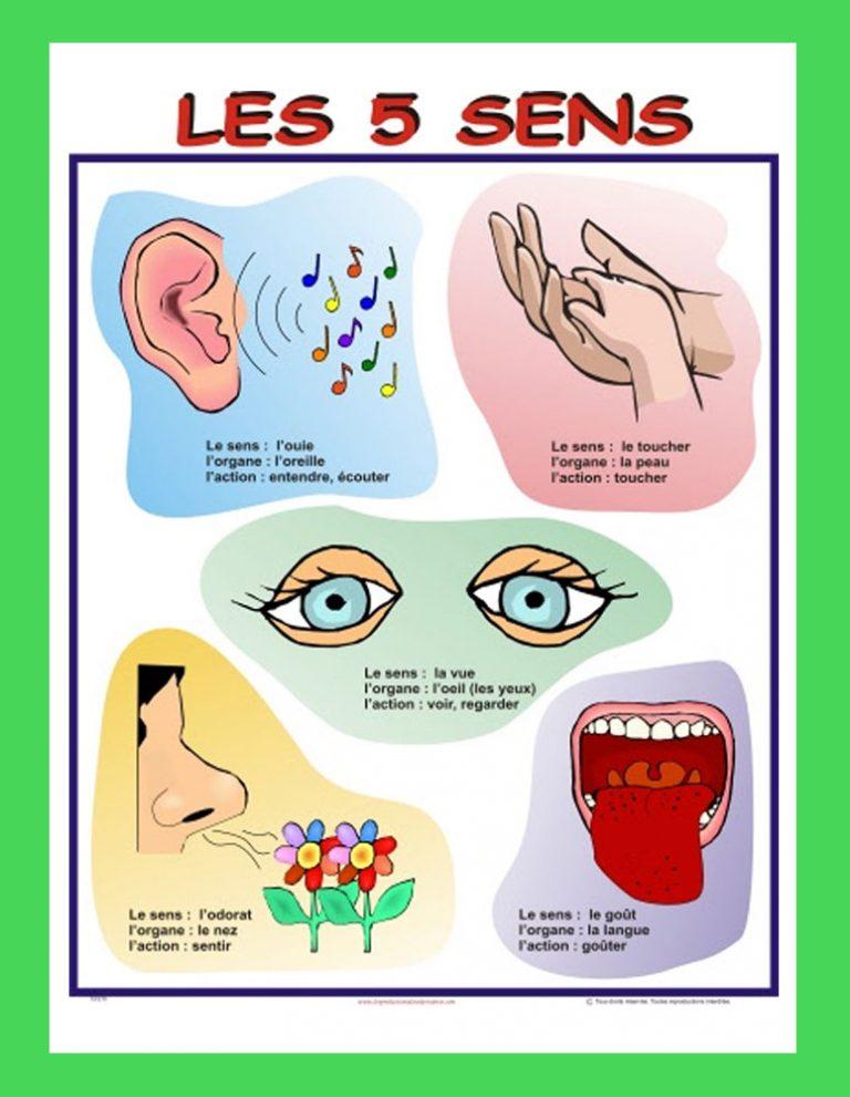 Affiche Les 5 sens