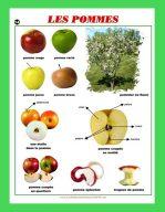 Affiche Les Pommes